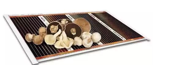 сушка грибов ик ковром