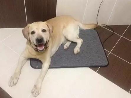 коврик греющий для животных