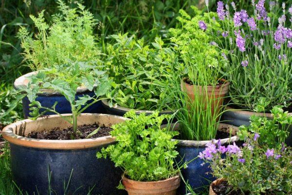 03-herbs