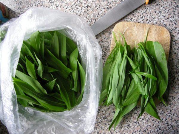 Allium-ursinum-2