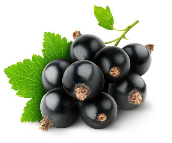 BlackCurrant-1
