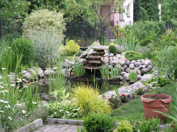 Garden_pond_34