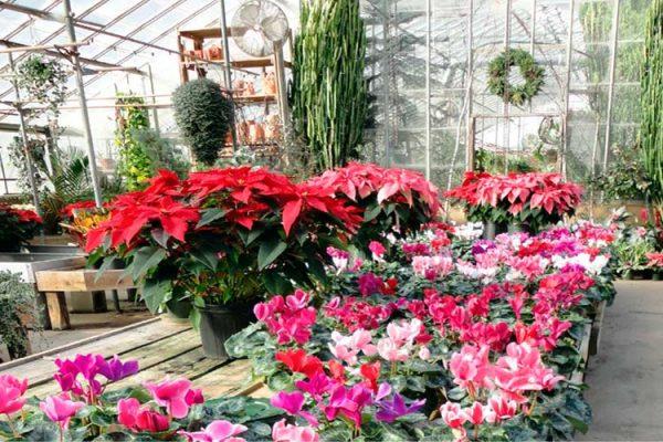 Greenhouse-flowers-big