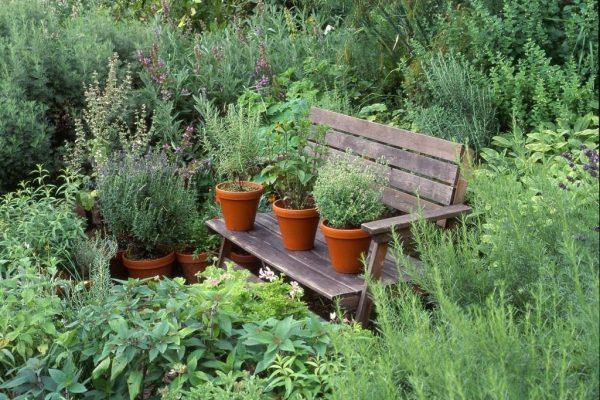 Medicinal-plant-garden