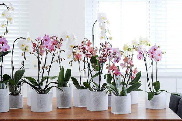 Peresadka-orhidej