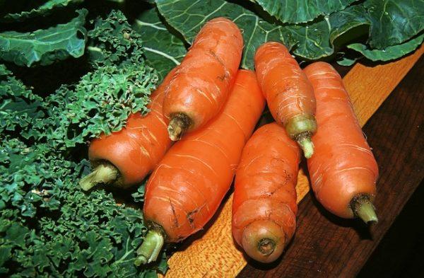 carrot-646108_640