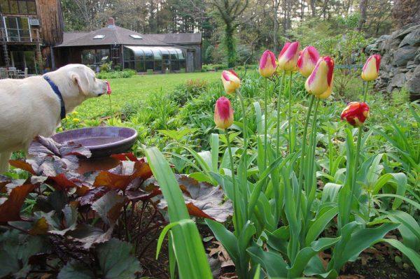 content_tulips-in-the-garden3