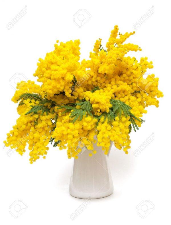cvetok_mimoza_22_13090913