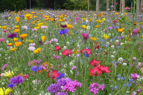 flower-meadow-summer-summer-flowers-wallpaper