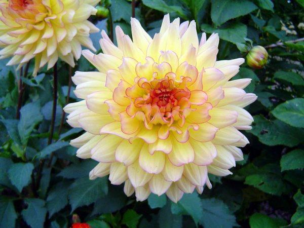 flowers534-800x600