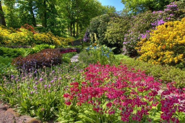 flowers_garden_beds_bushes_abundance_colors_allsorts_60436