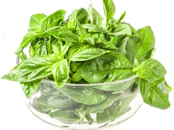 greens-basil-deluxe