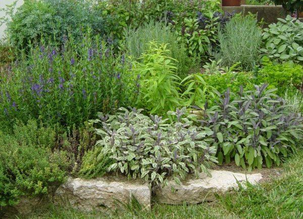 herbs-02-1