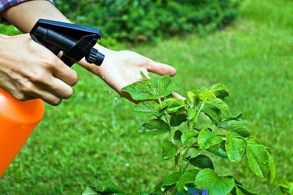 insekticid-aktara-jidkaya