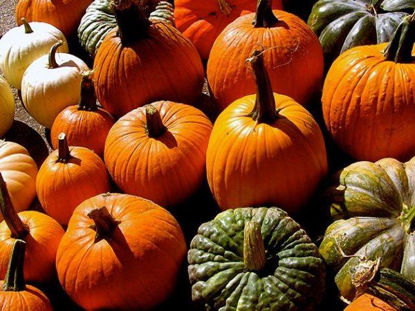 pumpkin4b