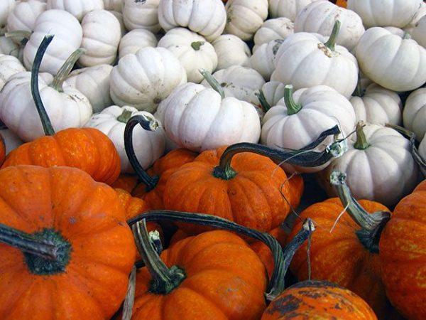 pumpkin5b