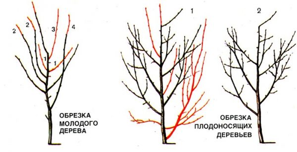 sliva_08