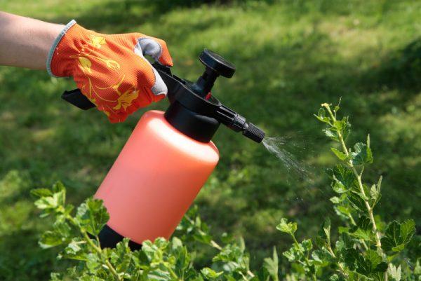 spraying_plants-e1459084224643