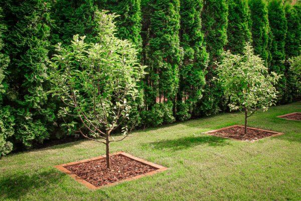 Надземная система растений. Основные отличия!