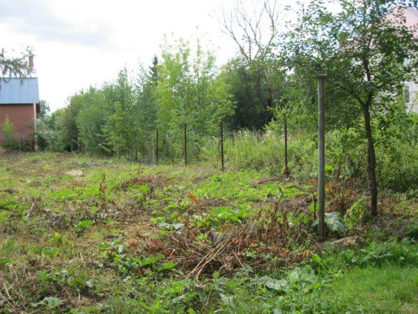 Как устранить с участка кустарники и кусты