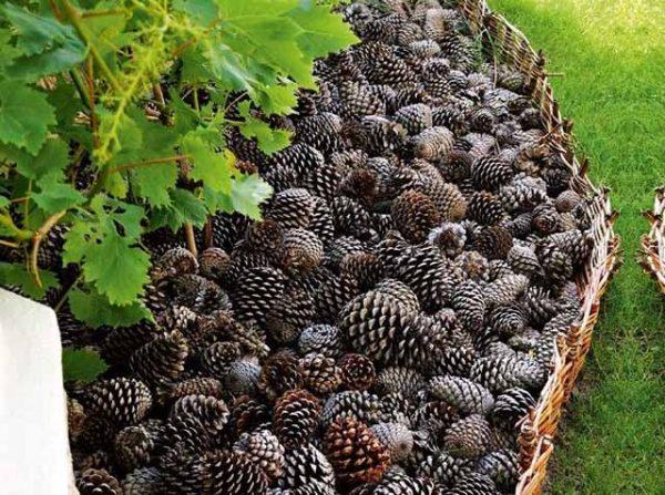 Are-Pine-Cones-Good-for-Mulch-1