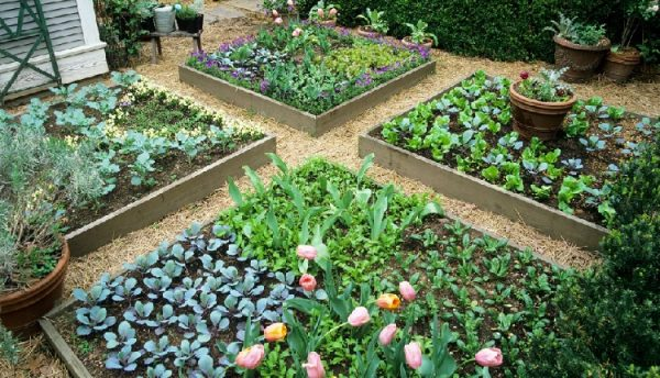CI_intensive-gardening-allows-a-lot-of-produce-to-grow-in-a-small-space.jpg.rend_.hgtvcom.1280.1024