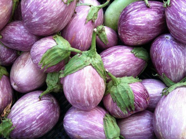 Eggplants-7