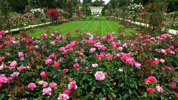 France_Gardens_Roses_Bagatelle_Rose_Garden_Paris_514650_3200x1800-1156x650