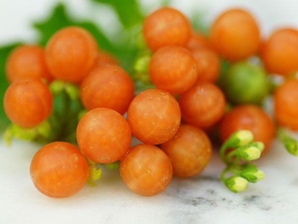 Paslen-chernyj-Oranzhevaya-yagoda-Otrikoli-Otricoli-Orange-Berry-Solanum-nigrum