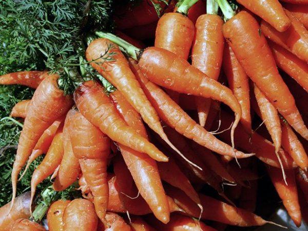 carrot4a