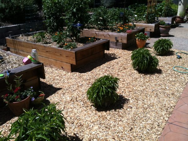 content_a-vegetable-garden-for-the-lazy