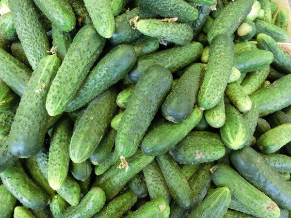 cucumbers-379886_960_720