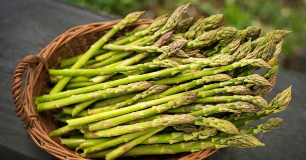 how-to-grow-asparagus-3