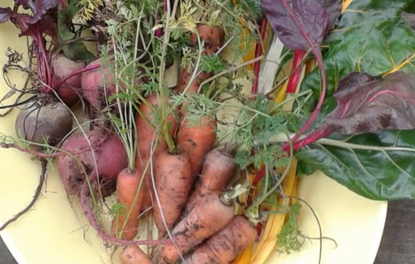 how-to-store-carrots-and-beets-in-the-winter-at-home1