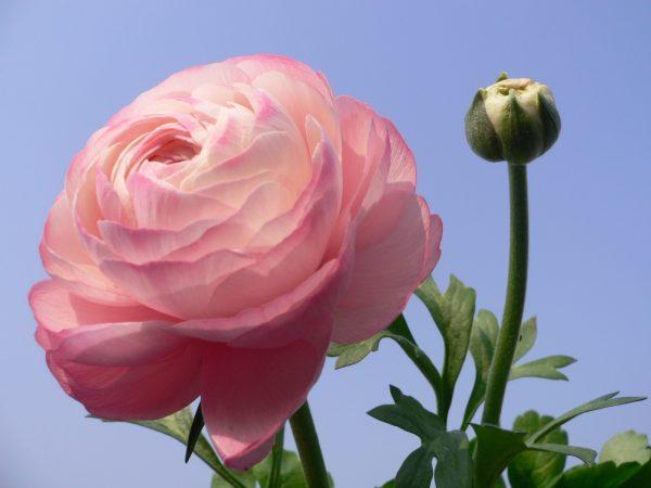 kartinki24_flowers_0191