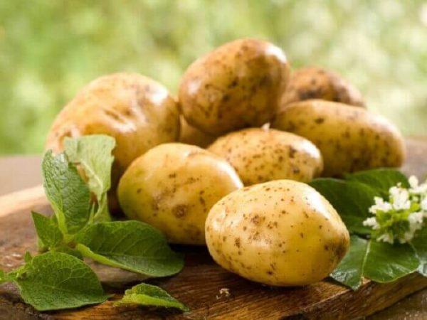 kartofel-molodoj
