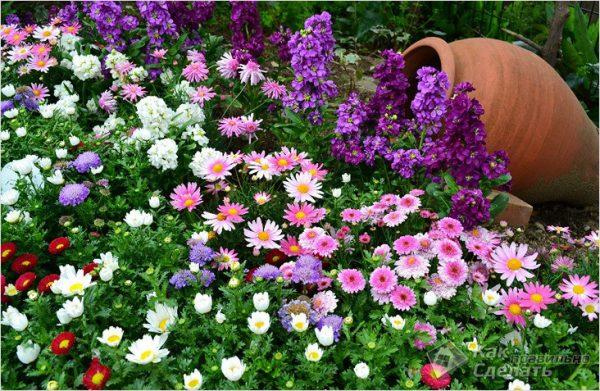 krasivyj-cvetnik