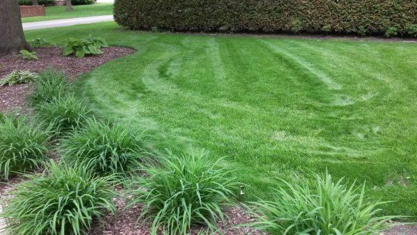 lawn-repair-07