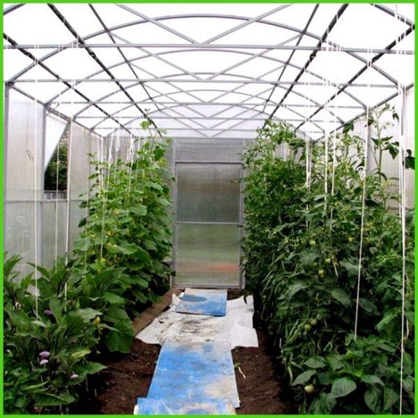 optimalnaja-temperatura-dlja-pomidor-v-teplice_1