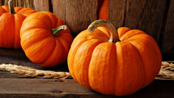 pumpkin-polza-1