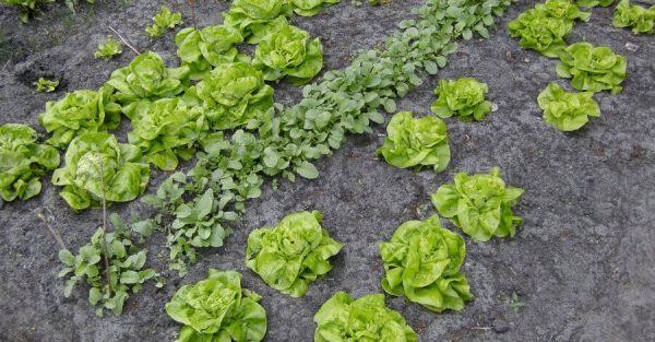 salat-foto