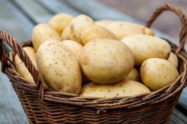 semennoi_kartofel