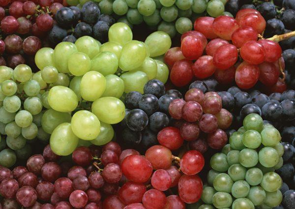 vinograd-raznotsvetnyiy-11777