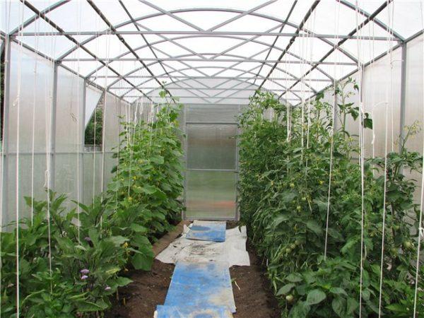 vyraschivanie-ogurtsov-i-pomidorov-v-odnoy-teplits