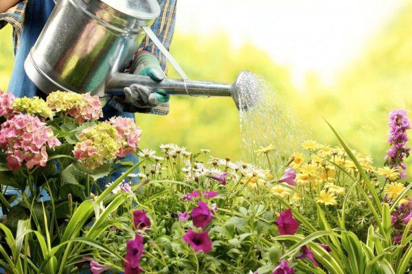watering-flowers