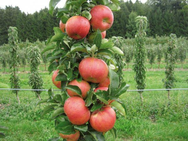 02-apple-tree