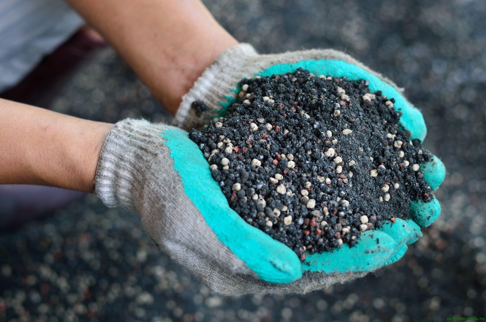 Картинки по запросу Азбука подкормок: фосфорные удобрения