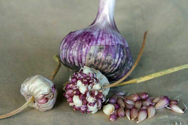 Garlic_Bulbils-big