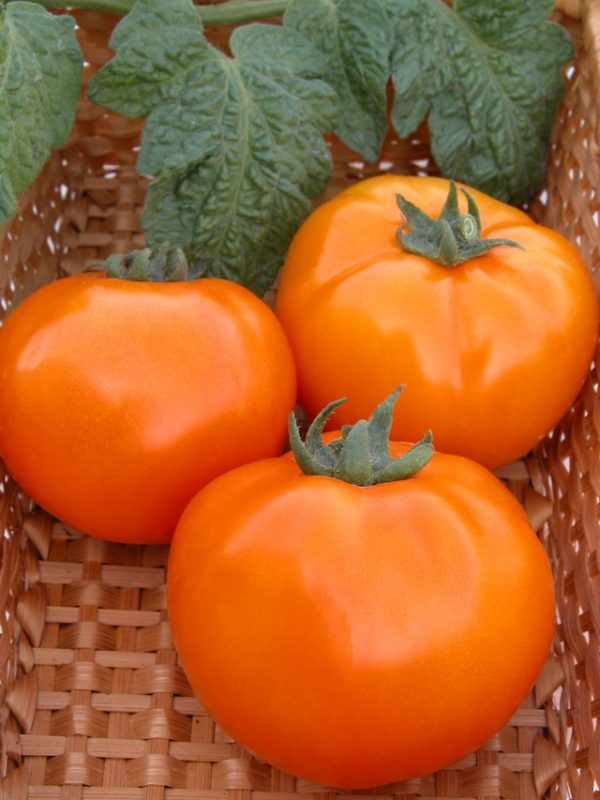 Na-foto-tomat-hurma