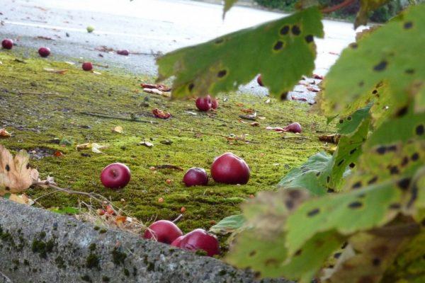 autumn_garden_02